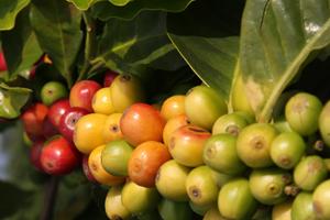 Fot. Global Group Coffee