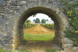 Fot. Château Climens/Vincent Bengold