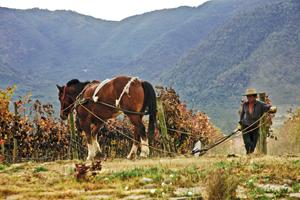 Fot. Emiliana Organic Vineyads