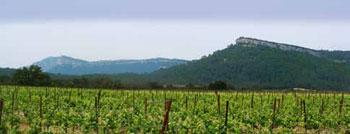 Winnice u stóp Pic Saint-Loup/Fot. M. Śmietana