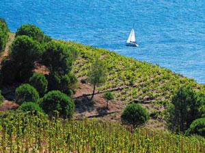 Od południa na klimat Langwedocji wpływa Morze Śródziemne/Fot. Filière Vin Septimanie Export
