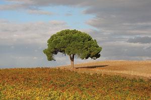 Fot. H. Annoni Garcia