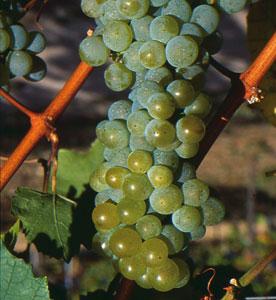 Fot. Austrian Wine Marketing
