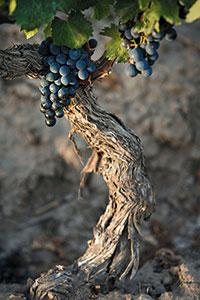 Fot. Wines of Argentina/Garcia Betancourt