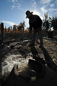 Fot. Wines of Argentina/Carlos Calise Sunset