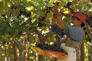 Fot. Fot. Wines of Argentina/Stock Photos GGP
