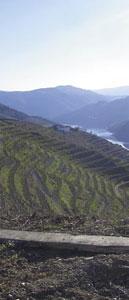 Dolina Douro to kraina srogich warunków dla roślinności. Dlatego winorośl, czerpiąc składniki odzywcze z głębin ziemi, daje jedyny w swoim rodzaju moszcz/Fot. P. Gąsiorek