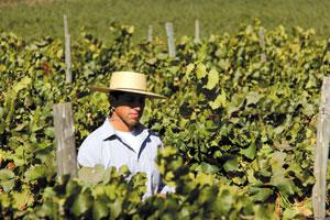 Fot. Emiliana Organic Vineyards