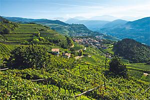 fot. Stefano Masotto per Vini Del Trentino