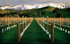 Fot. wine-marlborough.co.nz