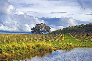 Fot. Thorn-Clarke Wines