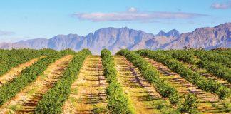 winnice w Argentynie | fot. orangecrush / shutterstock