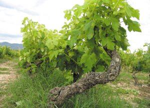 Rioja dwóch pokoleń