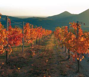 Czerwone Wzgórza Euganejskie