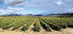 Wędrujące winogrady