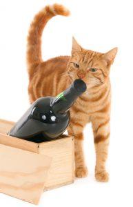 Czy twój kot kupowałby wino?