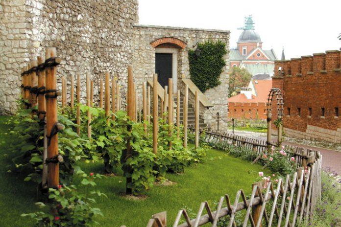 Wawelskie winnice