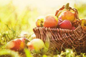 Jabłko asprawa polska