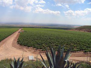 Reformacja w Rioja
