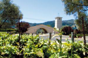 Słoneczny stan winiarski