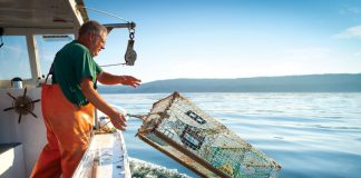 Połów homarów