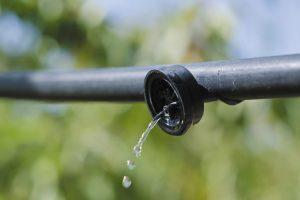 Bez wody nie ma życia