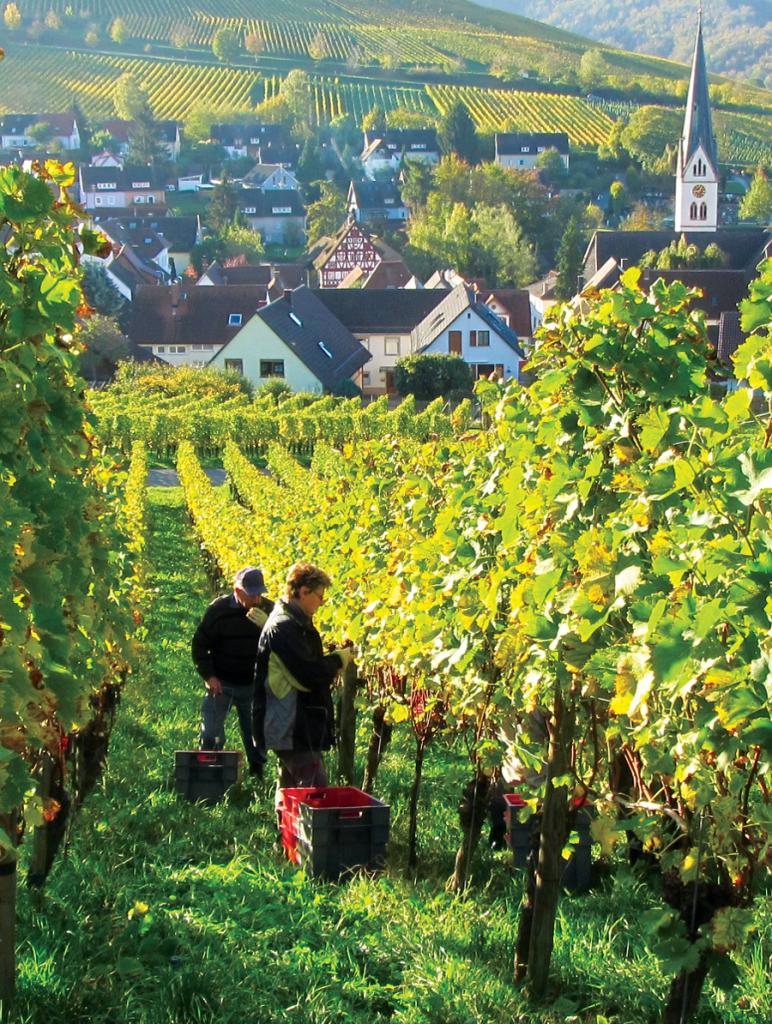 Badenia – Palatynat – Wirtembergia