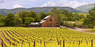 winnice w Napa Valley