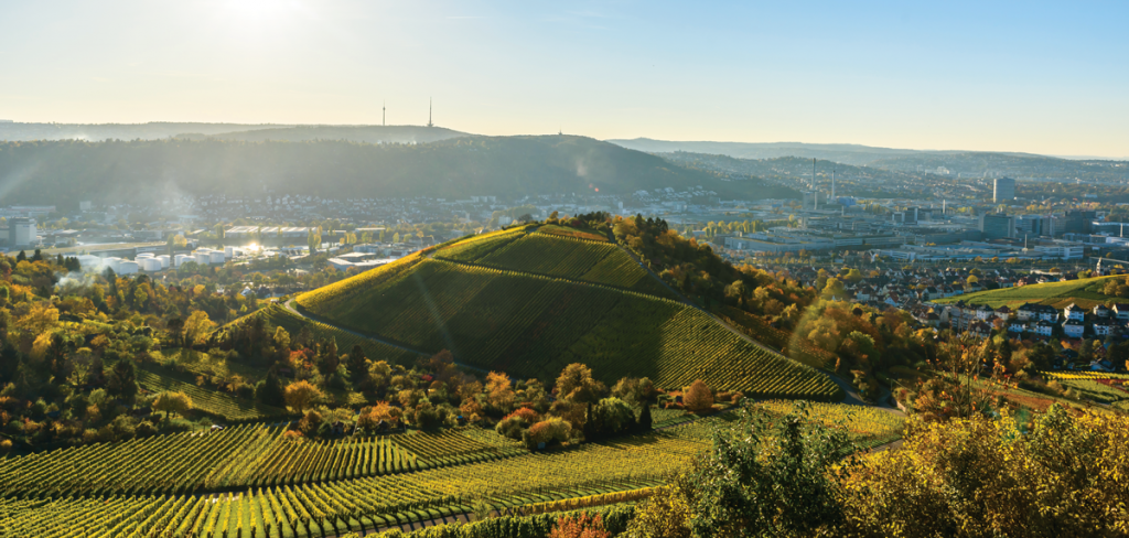 winnice Stuttgartu