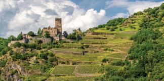 Zamek Gutenfels i winnice nad miastem Kaub