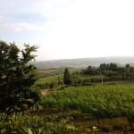 widok na Toskanię z okolic Cantine Antinori, 2018 | fot. M. Bardel