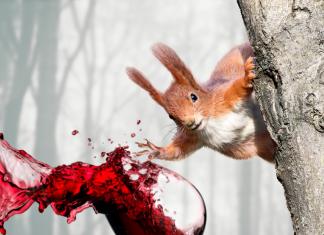 czy Ruda Wiewióra narobi zamieszania? | grafika © Czas Wina | fot. TOP_Flag, Mariyana M / shutterstock