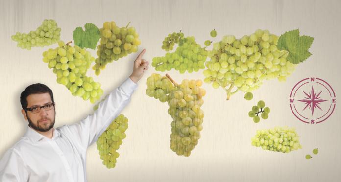 Wojciech Giebuta poleca: zestaw win sauvignon blanc z różnych części świata