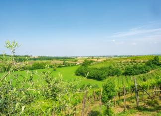 Colli Berici, region Veneto, Włochy | fot. FEDELE FERRARA / shutterstock