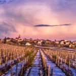 Mroźny świt nad mołdawskimi winnicami | fot. ungureanuvadim / shutterstock