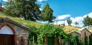 Morawy są inne. Przede wszystkim są winne, a nie piwne, w szczególności południowa ich część. To kraina wina i winorośli uprawianej tu od czasów rzymskich. Tutejsza ludność spędza równie dużo czasu w winiarniach, jak Czesi w piwiarniach. | fot. annie_zhak / shutterstock