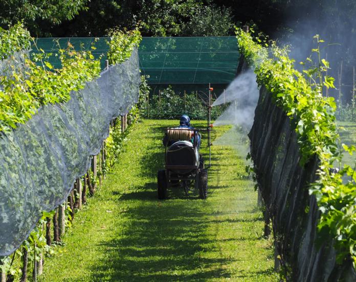 Winiarz w ochronnym ubraniu spryskuje winnicę. Na ochronę winogradów zużywa się około 70 procent wszystkich środków chemicznych w Europie. Co roku zdarzają się zatrucia w czasie oprysków. | fot. luca pbl / shutterstock