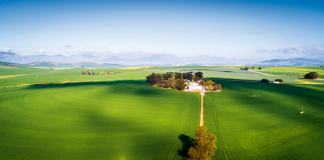 Swartland w RPA, zdjęcie z drona | fot. Dewald Kirsten / shutterstock