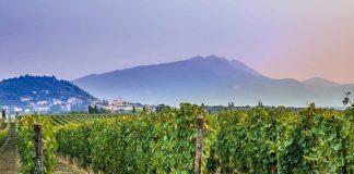 Winnice w Bardolino tuż przez zbiorami. | fot. Photomario / shutterstock
