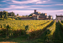 widok na Soave: zamek otoczony winnicami | fot. pointbreak / shutterstock