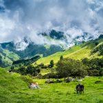 Dolina Cocora | fot. Nadine Folkertsma / shutterstock