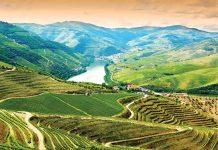 Qou vadis Douro?