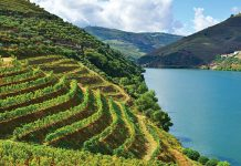 Portugalia, dolina rzeki Douro | fot. hermitis / shutterstock