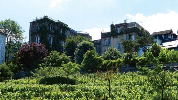 Winnica w Paryżu, Montmartre | fot. archiwum W. Gogoliński