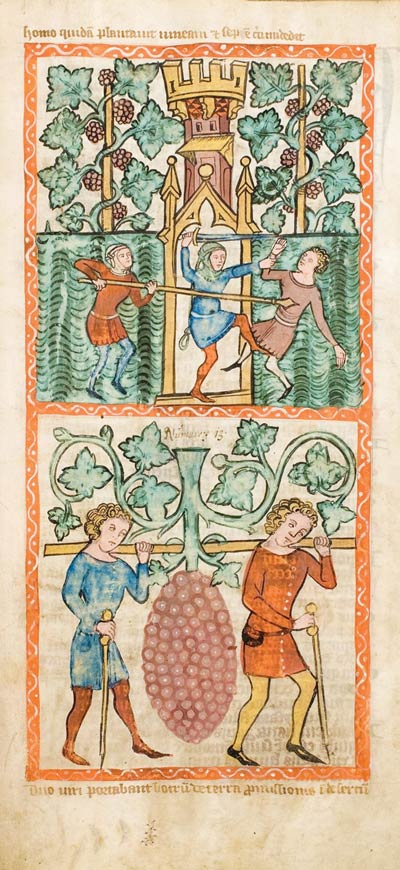 Średniowieczna miniatura przedstawiająca winnicę w Kolonii (1360 r.)