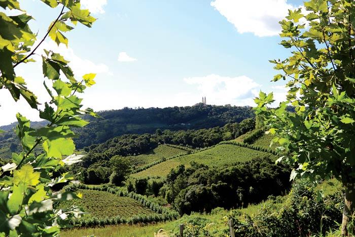 Winnice w Rio Grande do Sul | fot. Andreia Durante / shutterstock