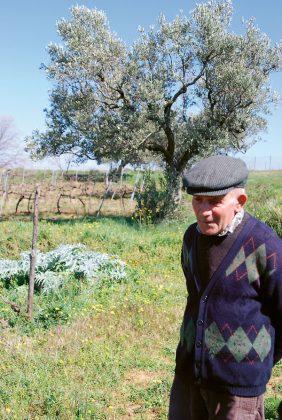 winiarz winogrodnik Kalabria Włochy