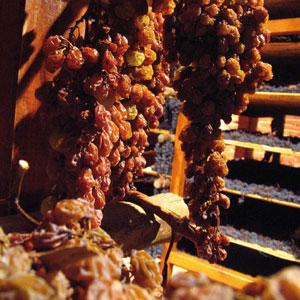 Winogrona botrytyzowane | fot. W. Gogoliński
