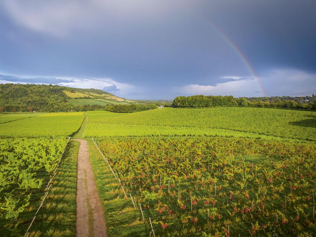 angielskie wino Anglia winnice