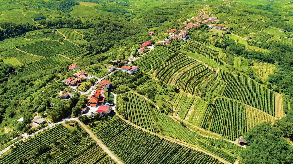 Słowenia wina ze Słowenii winnice
